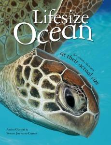 lifesize-ocean